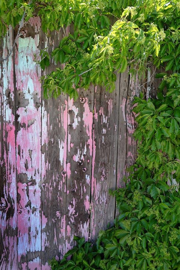 De oude Afgebroken Verf schilderde Houten Omheining Wall Rusty Nails met Gre stock afbeeldingen