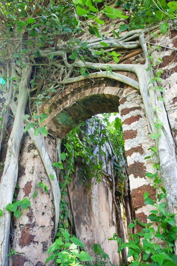 De oude banyan bomen behandelden oude bakstenen muur en boog van geruïneerd huis stock afbeelding
