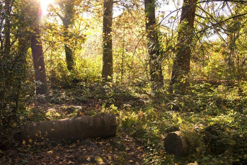 De oude bemoste boom opent een zonnige dag, achtergrond, aardontwerp het programma stock foto's