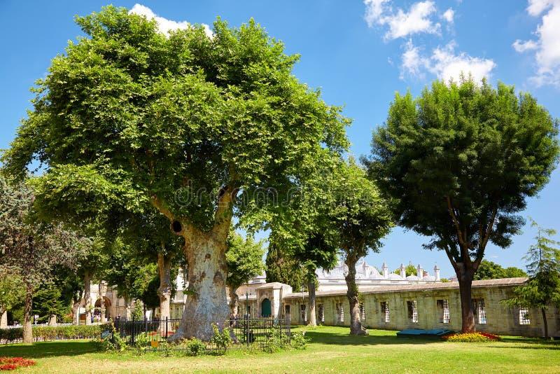 De oude bomen in de binnenplaats van Blauwe Moskee, Istanboel royalty-vrije stock afbeeldingen