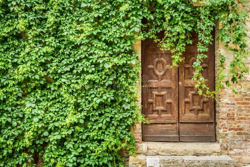De oude bouw met houten deur en klimop stock foto's
