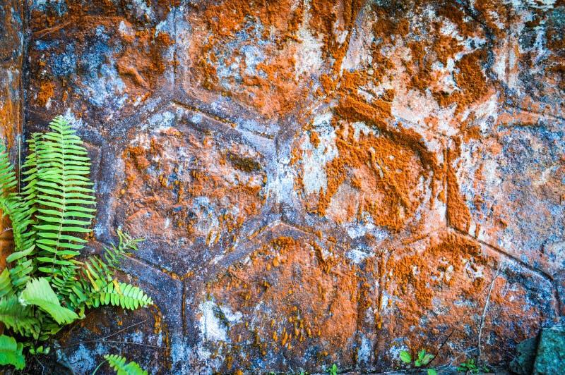 De oude die muren van de kloostersteen met mos worden behandeld stock afbeeldingen