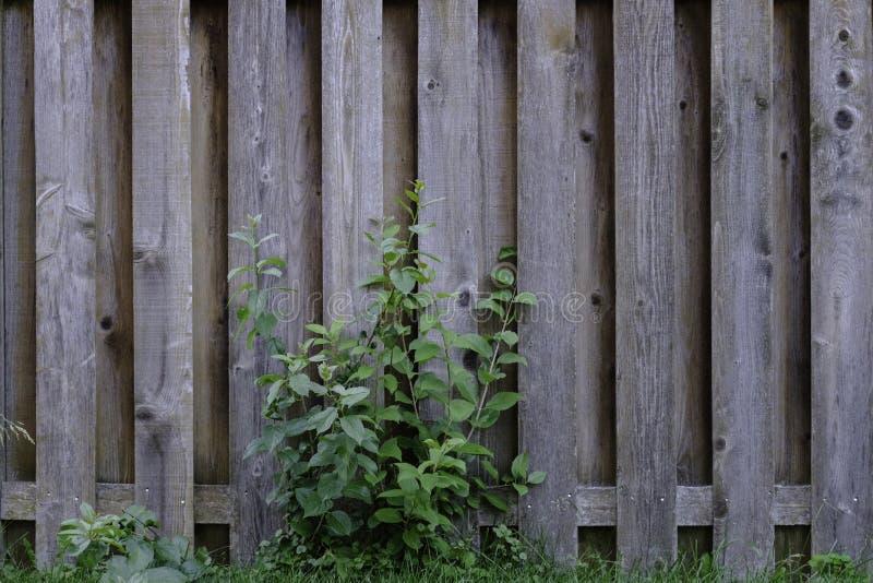 De oude Doorstane Knotty Omheining van het Pijnboomhout met Gebladerte stock afbeelding