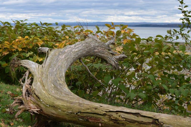 De oude houten boomstam door de rivier stock fotografie