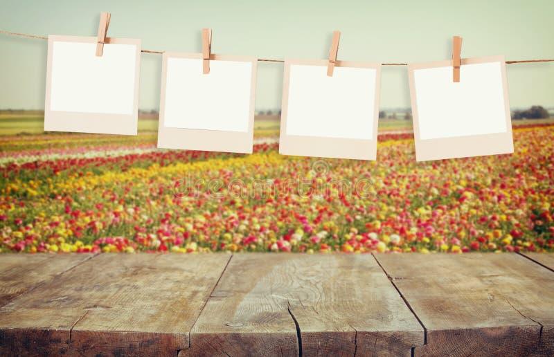 De oude kaders die van de polaroidfoto op een kabel met uitstekende houten raadslijst hangen voor de zomer bloeit het landschap v stock afbeeldingen