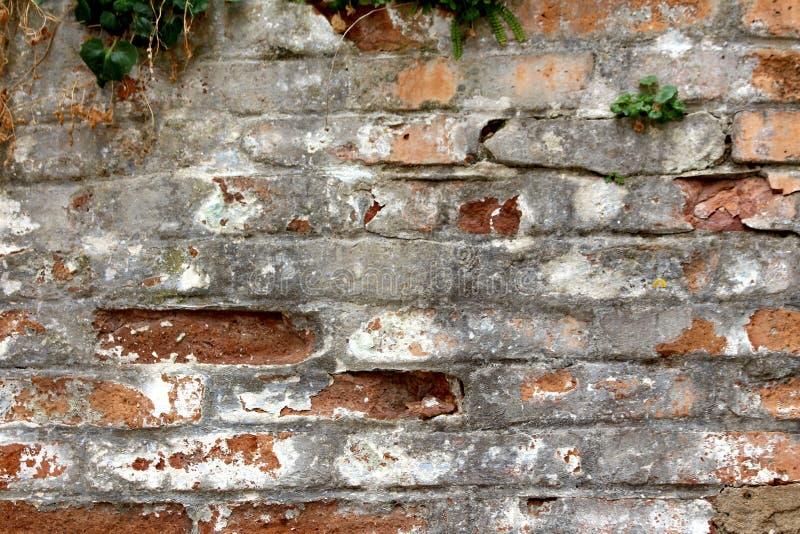 De oude rode bakstenen en de steen barstten dilapidated muur met kleine installatiestextuur als achtergrond stock foto