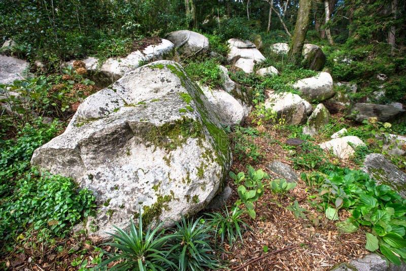 De oude rots in het mos-gekweekte hout royalty-vrije stock fotografie