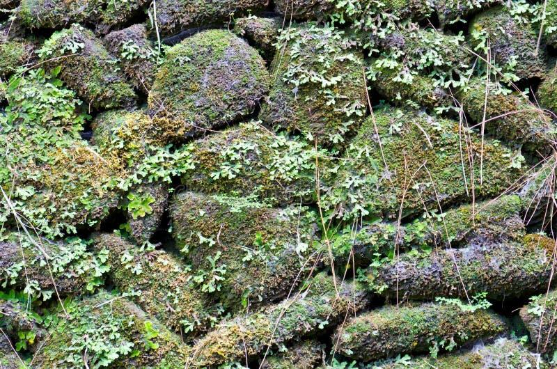 De oude steenmuur behandelde groen mos royalty-vrije stock foto's