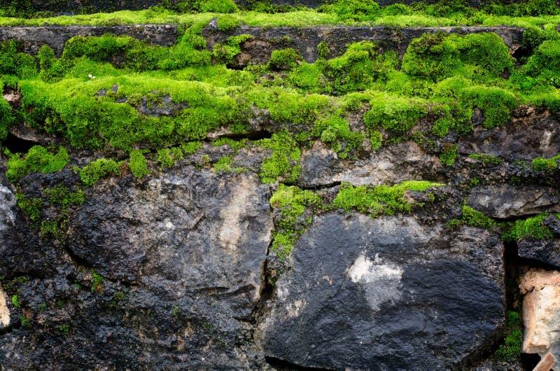 De oude steenmuur behandelde groen mos stock afbeeldingen