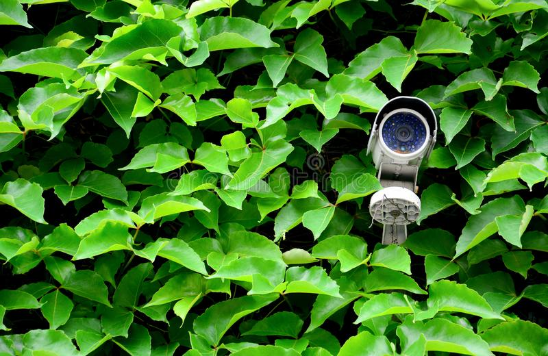 De oude witte camera of het toezicht van kabeltelevisie op de muur met de groene achtergrond van de bladklimplant voor de control royalty-vrije stock foto