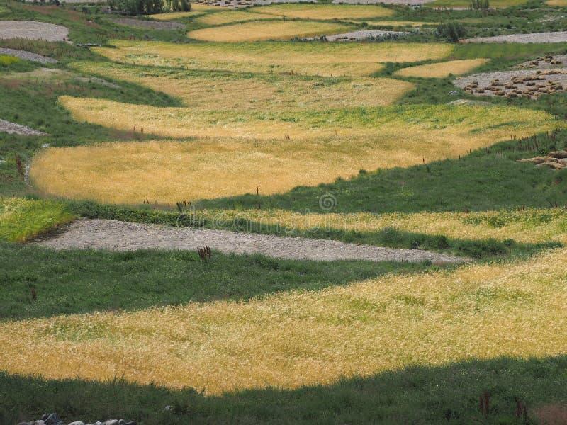 Download De Ovalen Verlengden Onregelmatig Vorm Van Gebied Met Rijpe Tarwe, Die Fragmenten Van Gele En Groene Kleur Afwisselen Stock Afbeelding - Afbeelding bestaande uit landbouw, kleurrijk: 107702303