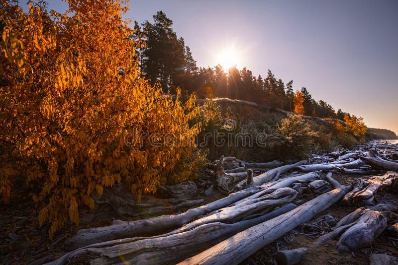 De overblijfselen van de bomen op de kust De Ob-Rivier, Siberië, Ru stock afbeelding