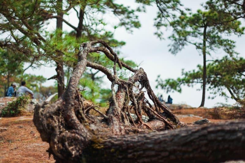 De overblijfselen van dode bomen zijn een overweldigende visuele component stock foto