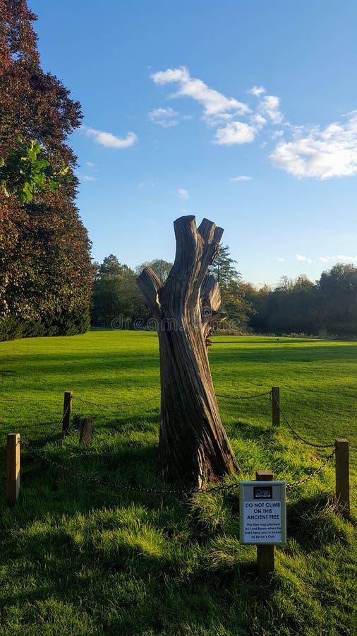 De overblijfselen van een boom stock afbeeldingen