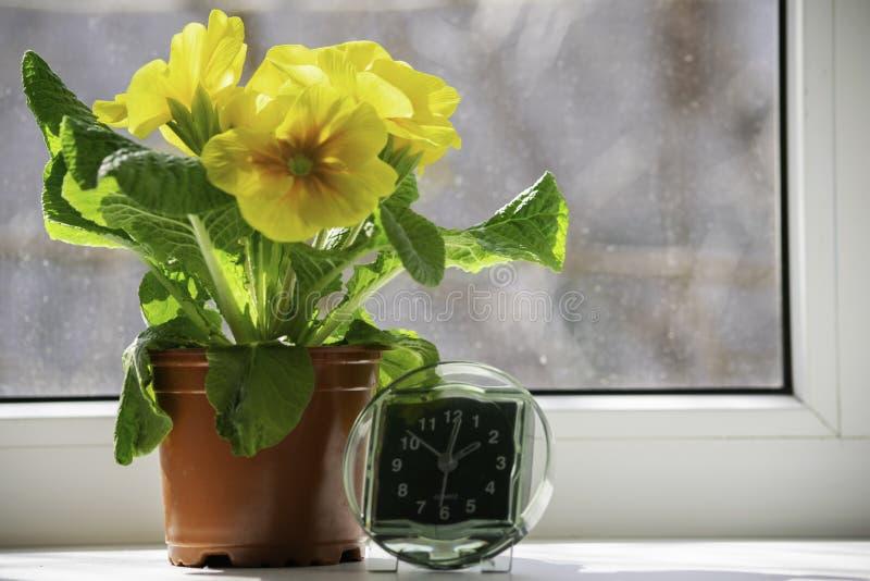 De overgang naar de zomertijd, de aankomst die van de lente, de klok zich op de zonovergoten vensterbank naast de gele bloem bevi royalty-vrije stock afbeeldingen
