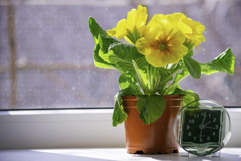 De overgang naar de zomertijd, de aankomst die van de lente, de klok zich op de zonovergoten vensterbank naast de gele bloem bevi stock afbeeldingen
