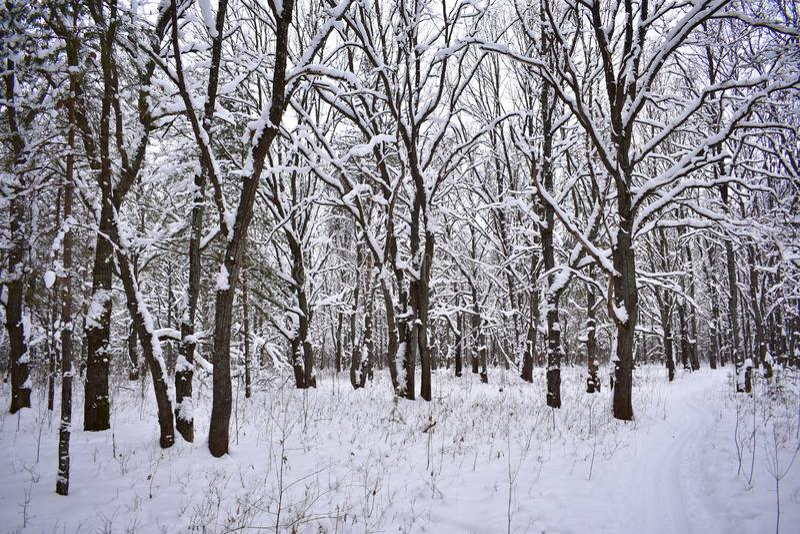 De overpeinzing van verbazend de winterbos geeft een sensatie van opgewektheid en volheid van het leven stock foto's