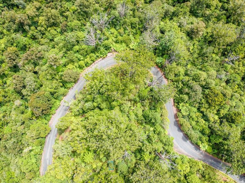 De overweldigende luchthommelmening van een winderige weg leidt 12 leidend via het Bos van Waipoua Kauri royalty-vrije stock foto's
