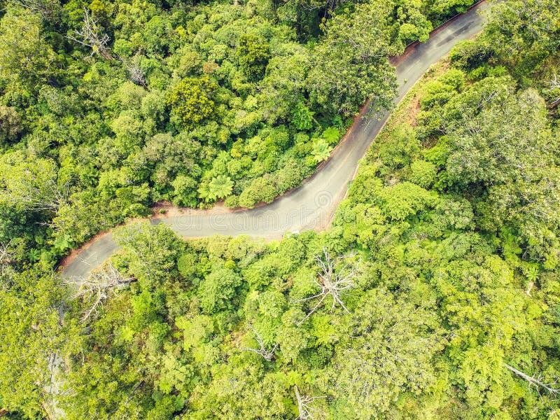 De overweldigende luchthommelmening van een winderige weg leidt 12 leidend via het Bos van Waipoua Kauri stock fotografie