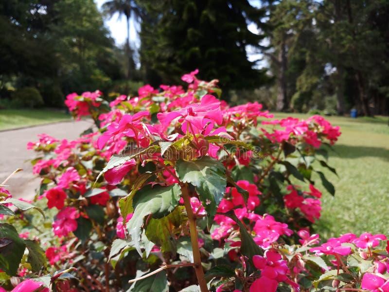 De overweldigende purpere kleur bloeit mooi royalty-vrije stock foto