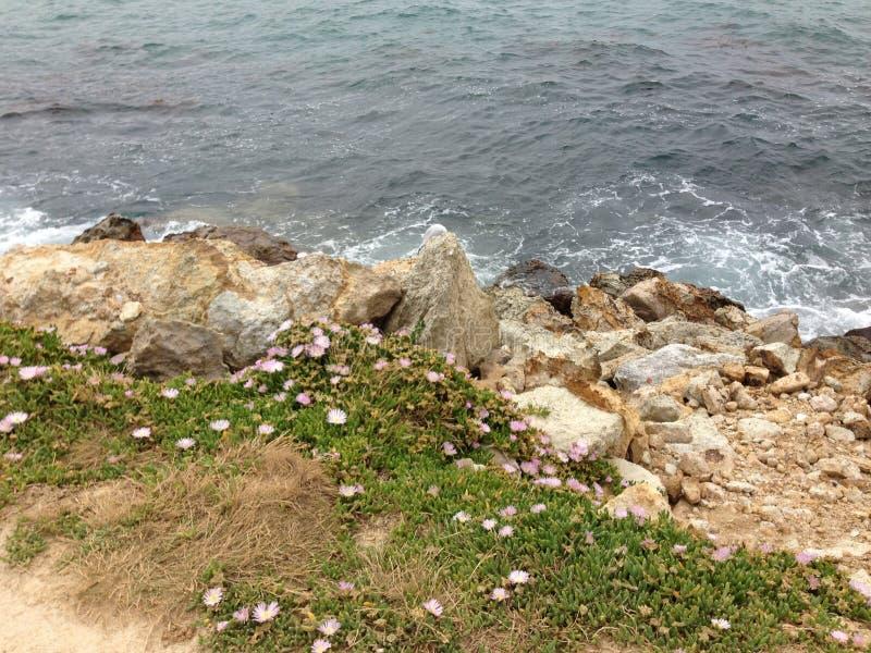 De overzees-rots-installaties coëxisteren samen stock afbeeldingen