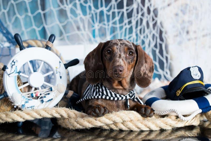De overzeese decoratie van de puppyzeeman en royalty-vrije stock foto