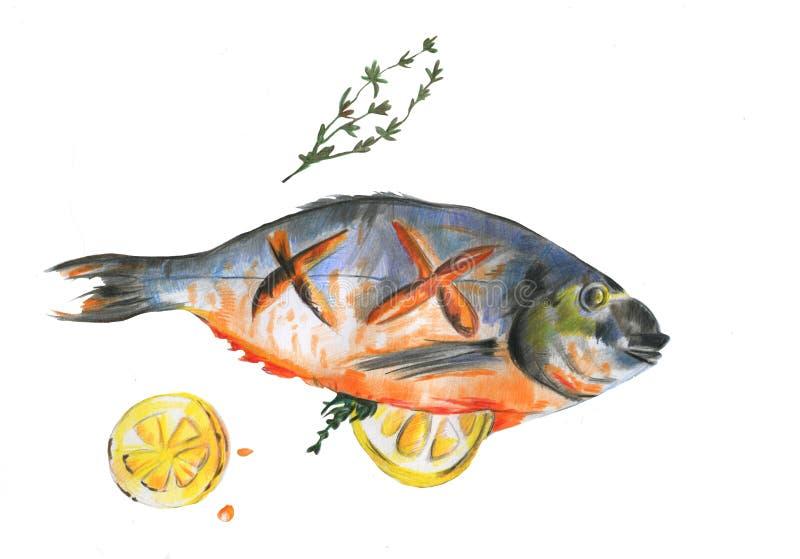 De Overzeese die Brasem van waterverfvissen met plak van citroen en rozemarijn op witte achtergrond wordt gekookt royalty-vrije illustratie