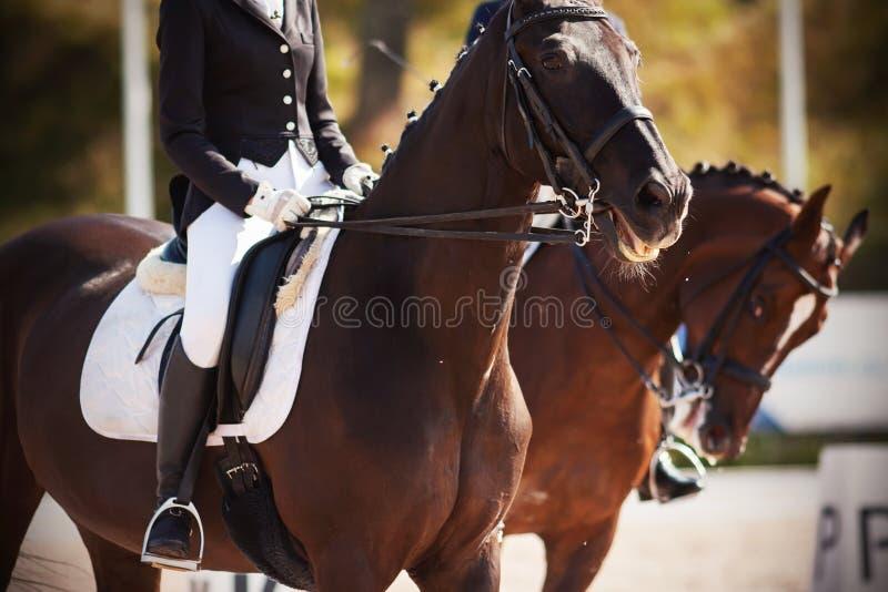 De paarden, met ruiters in zadels, nemen aan dressuurcompetities deel royalty-vrije stock afbeeldingen