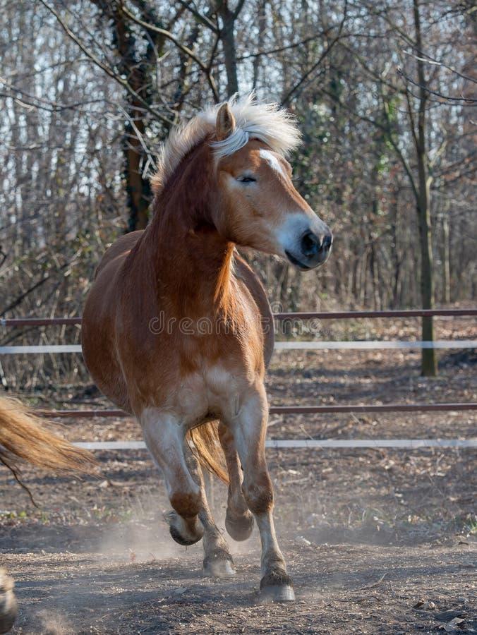 De paarden stellen vrij in werking stock foto
