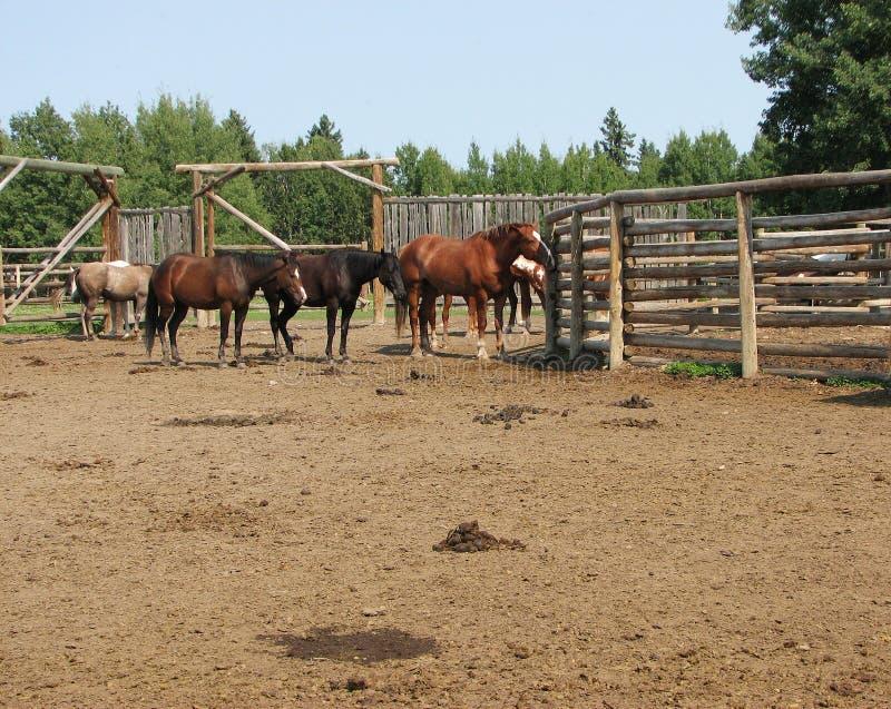 De Paarden van de boerderij stock foto's