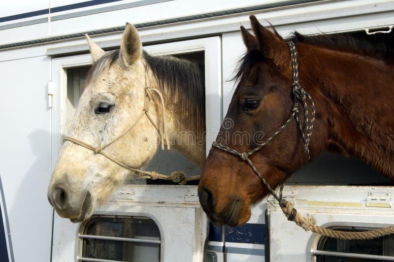 De Paarden van de rodeo royalty-vrije stock fotografie