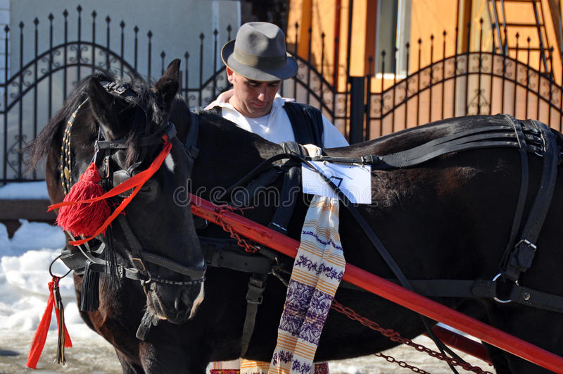 De paarden van de zorg stock foto