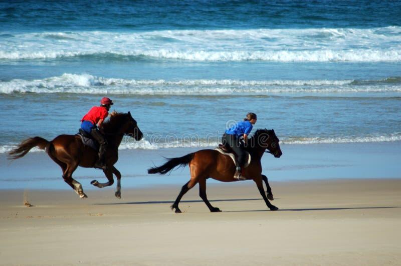 De paarden van het strand stock foto