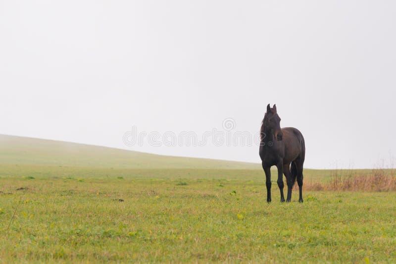 De paarden weiden op een groen gebied tegen een achtergrond van lage wolken stock foto