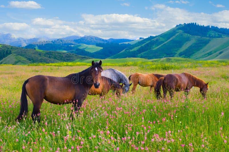 De paarden zijn geweid op een weide royalty-vrije stock afbeelding