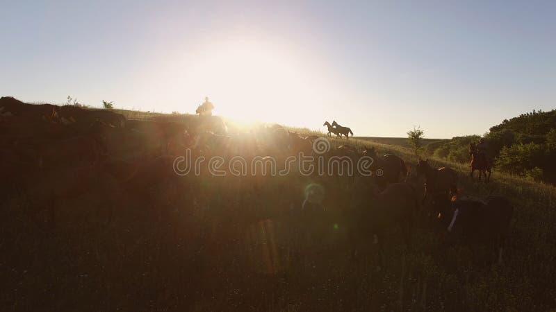 De paardkudde beweegt zich stock fotografie