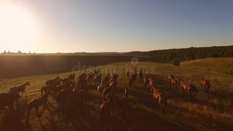 De paardkudde galoppeert royalty-vrije stock afbeeldingen