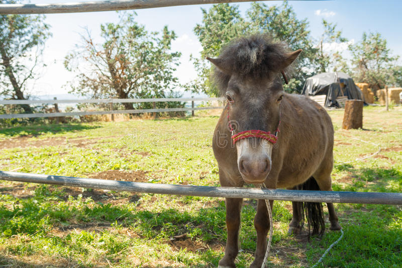 De paardponey in de paddock stock fotografie