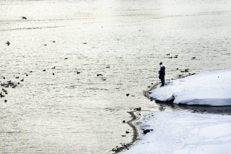De de paarman en vrouw bevinden zich op de sneeuwbank van de rivier en voeden de eenden stock foto