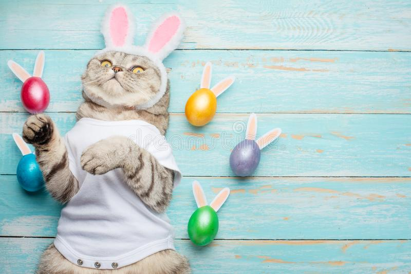 De paashaas, de kat met konijntjesoren en Pasen kleurden met eieren en oren Pasen en vakantie royalty-vrije stock foto's