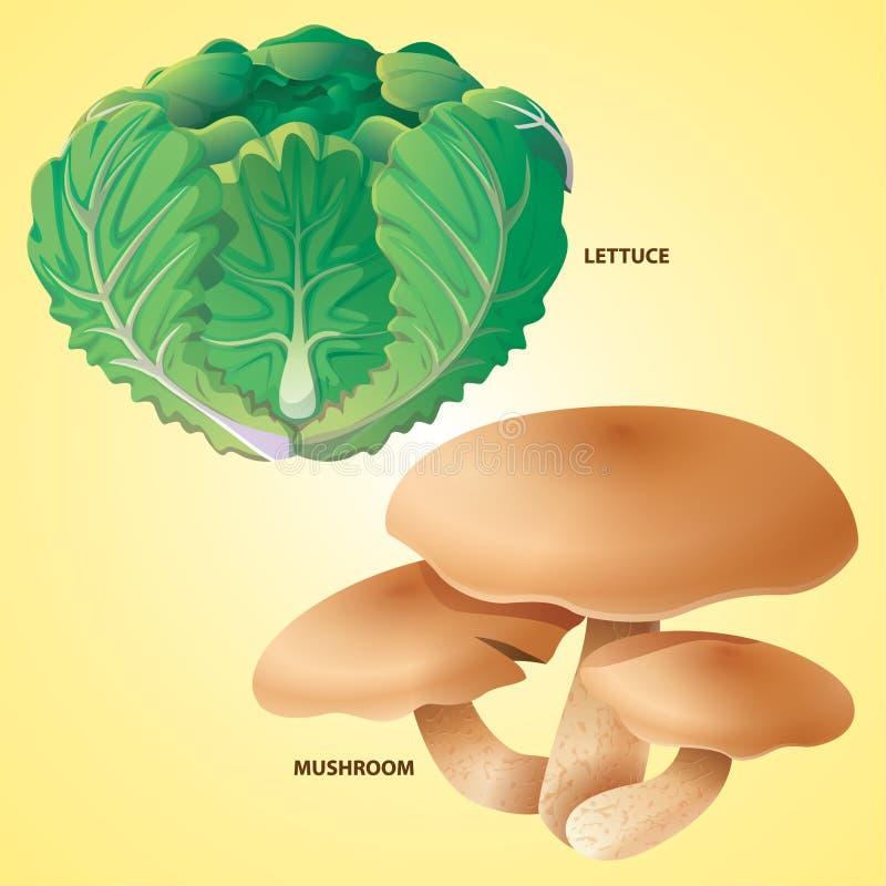 De paddestoelvector van de groentensla stock illustratie