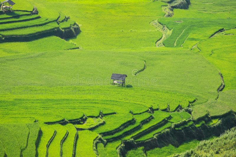 De padievelden op terrasvormig bereiden de oogst in Noordwestenvietnam voor royalty-vrije stock foto's