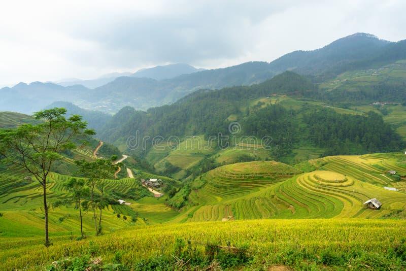 De padievelden op terrasvormig van Mu Cang Chai, YenBai, Padievelden bereiden de oogst in Noordwestenvietnam voor De landschappen royalty-vrije stock foto's