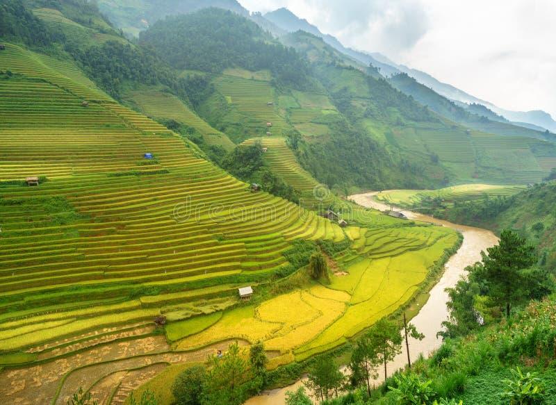 De padievelden op terrasvormig van Mu Cang Chai, YenBai, Padievelden bereiden de oogst in Noordwestenvietnam voor De landschappen royalty-vrije stock foto