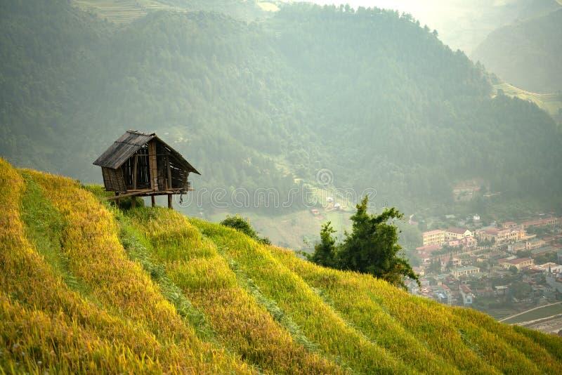 De Padievelden van Vietnam op terrasvormig royalty-vrije stock fotografie