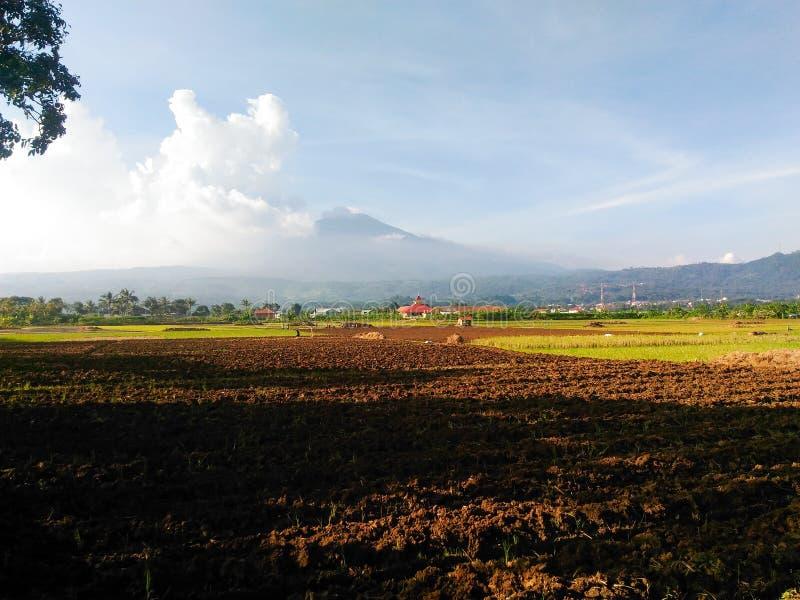 De padievelden zetten dichtbij Ciremai, West-Java, Indonesië op royalty-vrije stock foto's