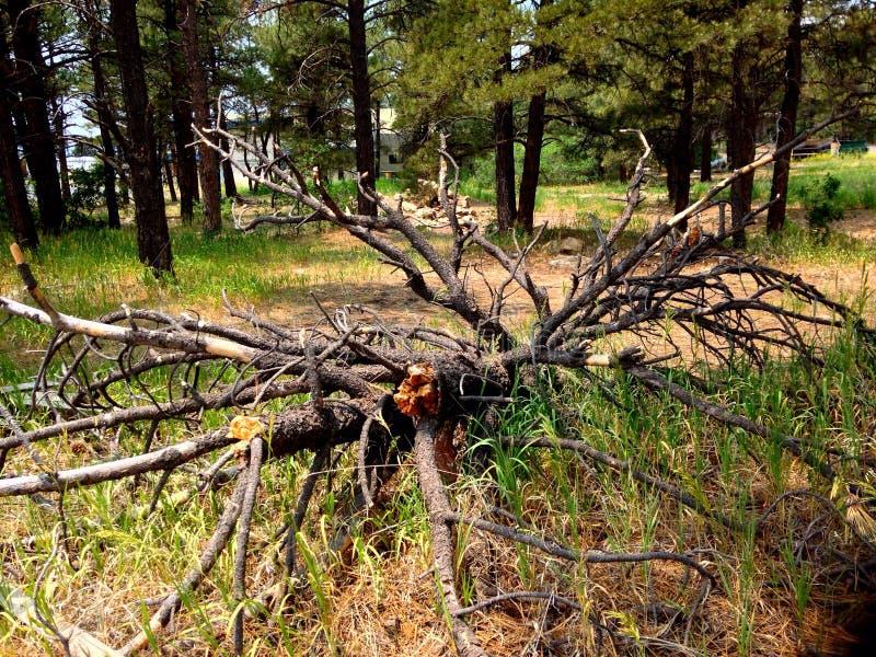 De Pagosalentes, Colorado stock foto's
