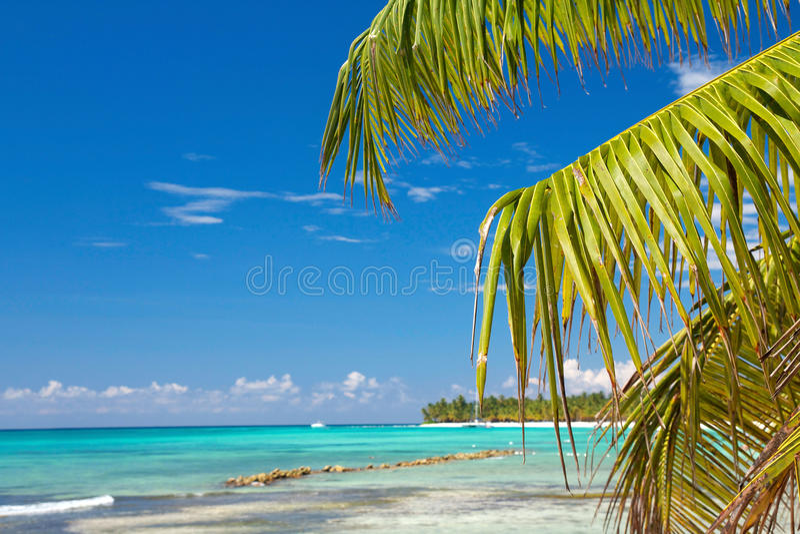 De palm doorbladert op Caraïbische overzees royalty-vrije stock foto's