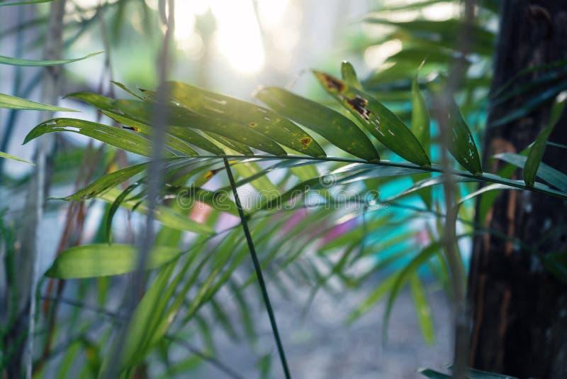 De palm doorbladert in de wildernis met zonsondergang backlight, Guatemala royalty-vrije stock foto's