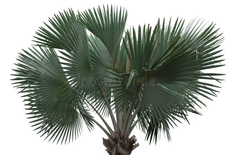 De palm isoleerde stan alleen stock foto's